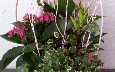 Cestas planta día de la Madre